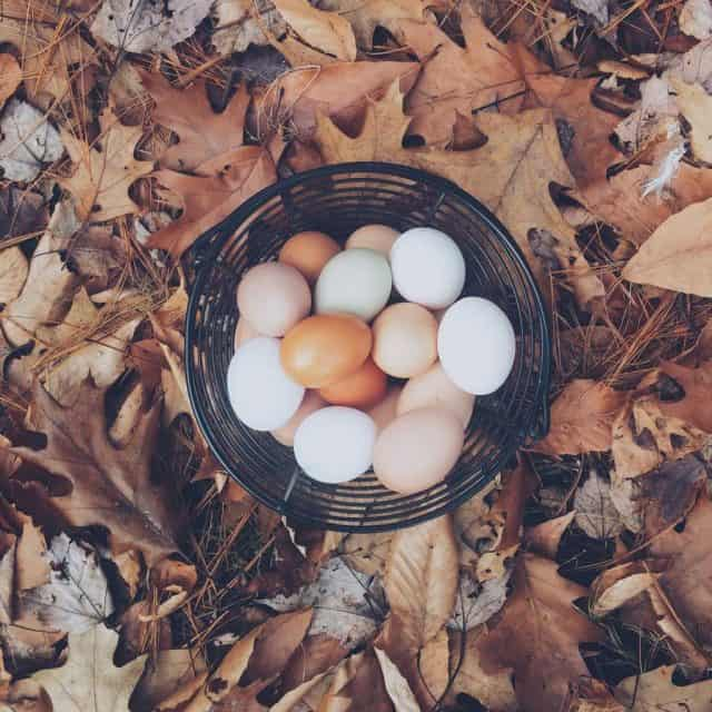 How the Weather Affects the Look of Your Eggs
