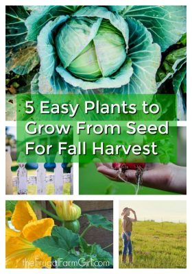 5 easy plants to grow from seed for fall harvest