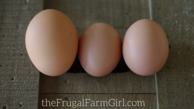 6 Things You Should Know Before a Hen Lays Eggs