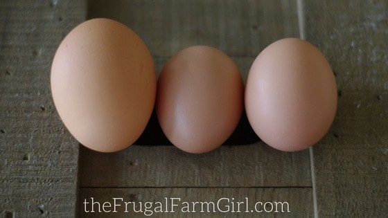 what tolook for before a hen lays an egg