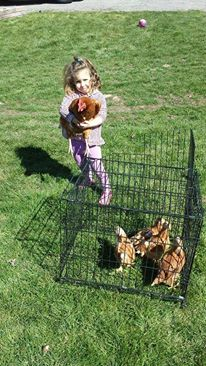 reasons why your kids should raise chickens
