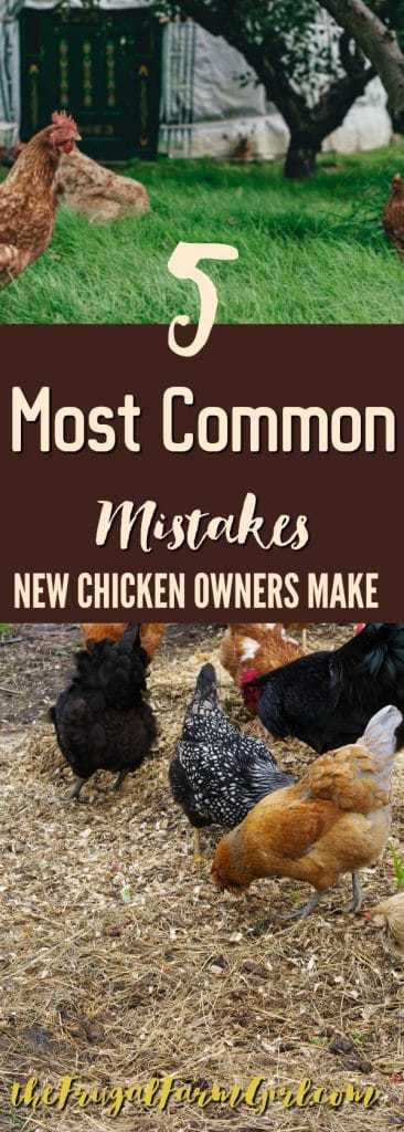 Thinking about getting chickens? You won't look like a pro when you make these 5 common Chicken Raising Mistakes. I know I made some of these.