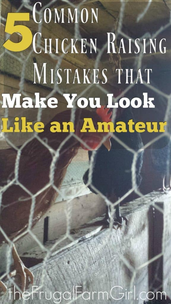 Common Chicken Raising Mistakes that Make You Look Like an Amateur