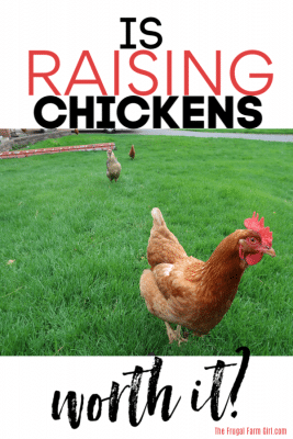 is raising chickens worth it