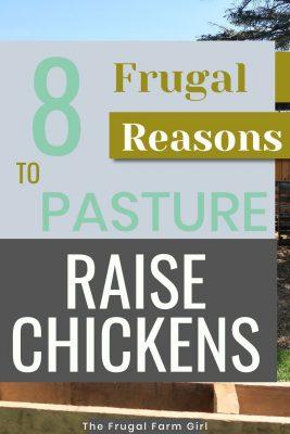 pasture raise chickens