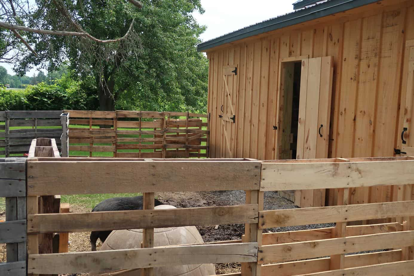 How To Build A Mini Pig Pen Using Pallets In Under 60