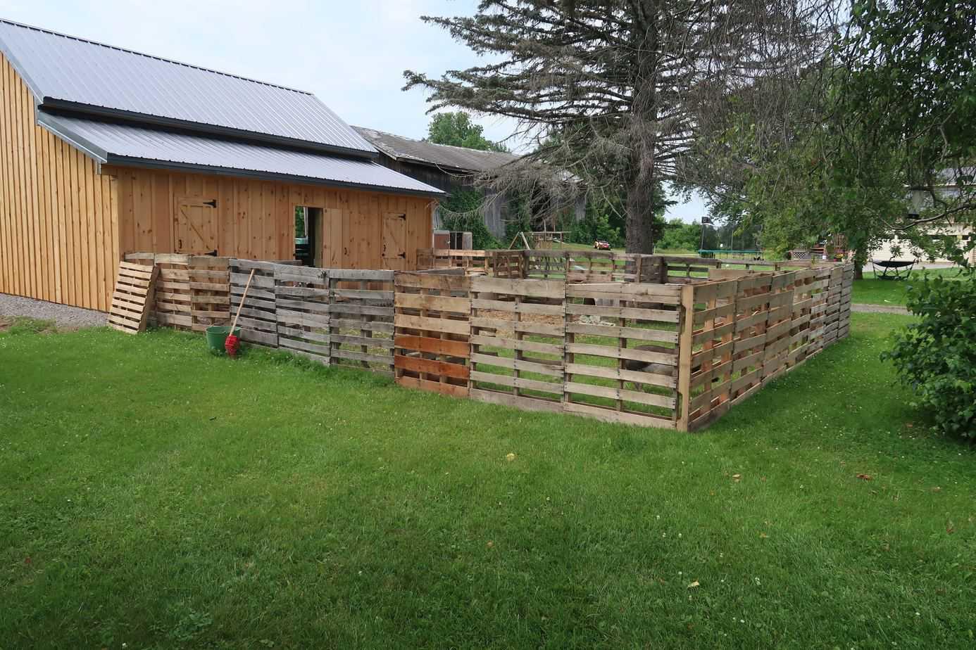 mini-pig-pallet-fencing