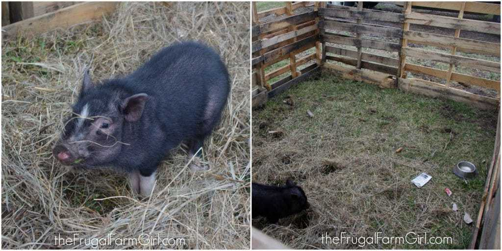 pig pen using pallets for free