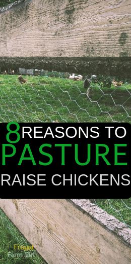 benefits of pasture raising chickens