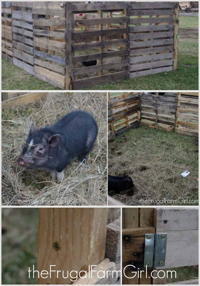 Need to create a free and sturdy pig pen? Try using free pallets to keep your little mini pig safe and able to explore happily about.