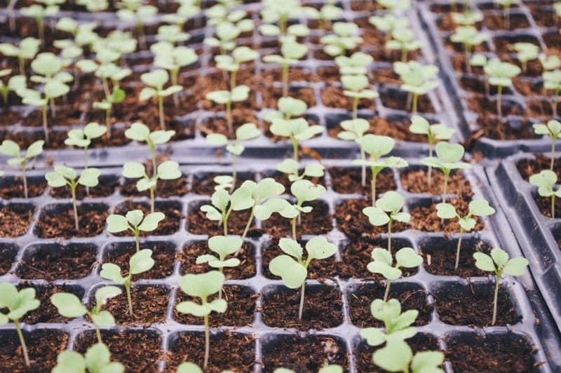 5 Creative Ways Frugal Farm Girls Start Seeds Indoors