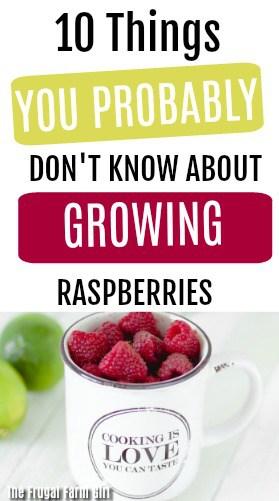 tips-growing-raspberries