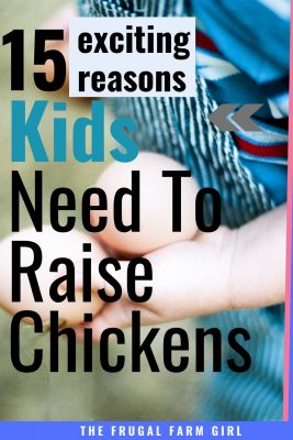 kids raise chickens tips