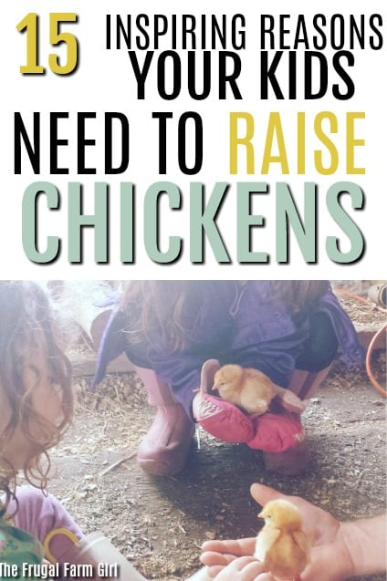 I wasn't quite sure if raising chicks would be the right choice for my family. What was all the work involved? I can see after checking out these tips raising chicks is a must try this year for our family.  #backyardchickens #chickens #flocks #tips #howto #farmlife  #backyard