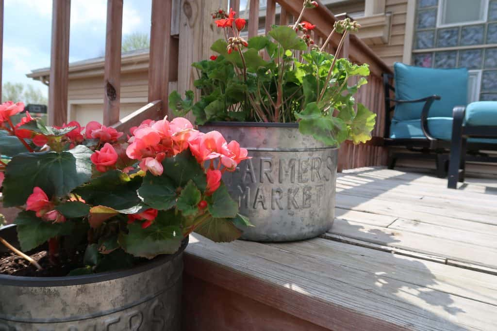 how to landscape cheap with potted plants