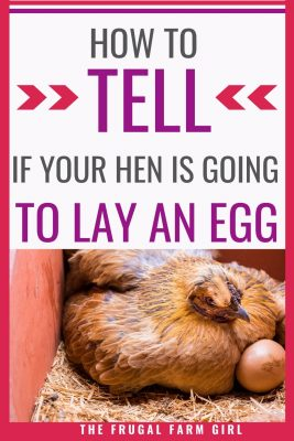 hens lay eggs sign