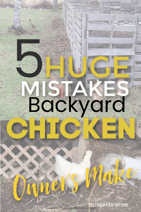 chicken mistakes backyard birds