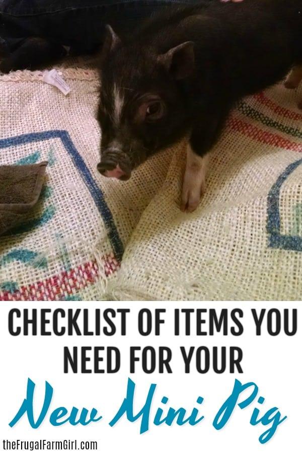 -items-need-mini-pig-supplies