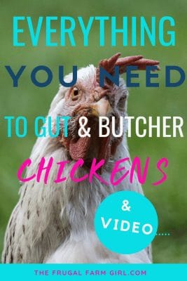 How to Gut & Butcher a Chicken