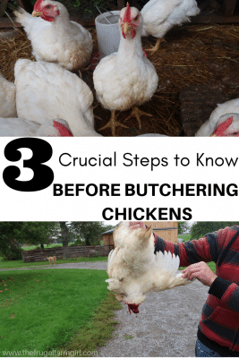 step by step guide how to gut a chicken and butcher