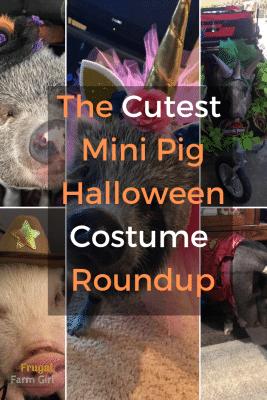 mini pig halloween costume ideas