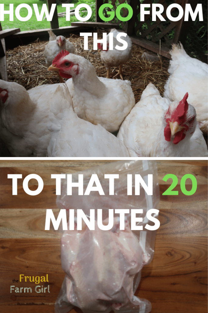 tips and videon on how to gut a chicken