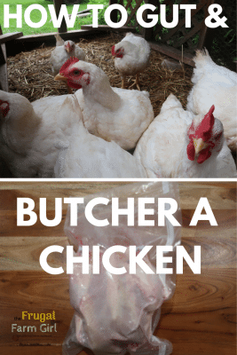 tips and video on on how to gut a chicken