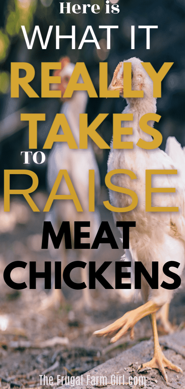 butcher butcher chickens tips and practices