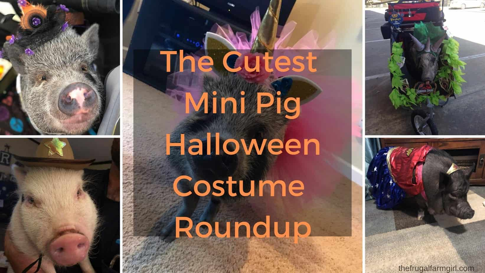 Cutest Mini Pig Halloween Costumes Roundup!
