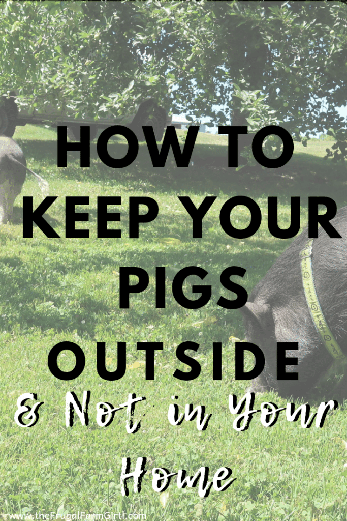 How To Transition Your Pigs To Live Outside