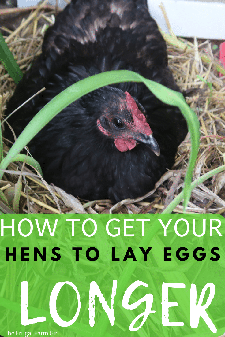 when do hens stop laying eggs