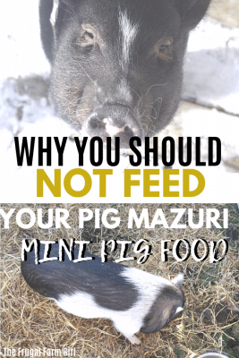 what not to feed pigs