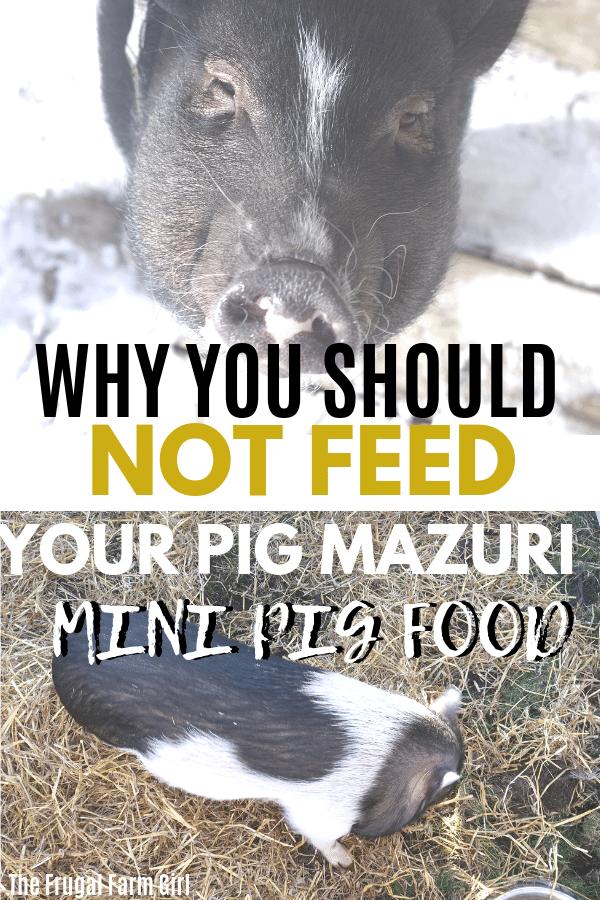 pig feeding tips