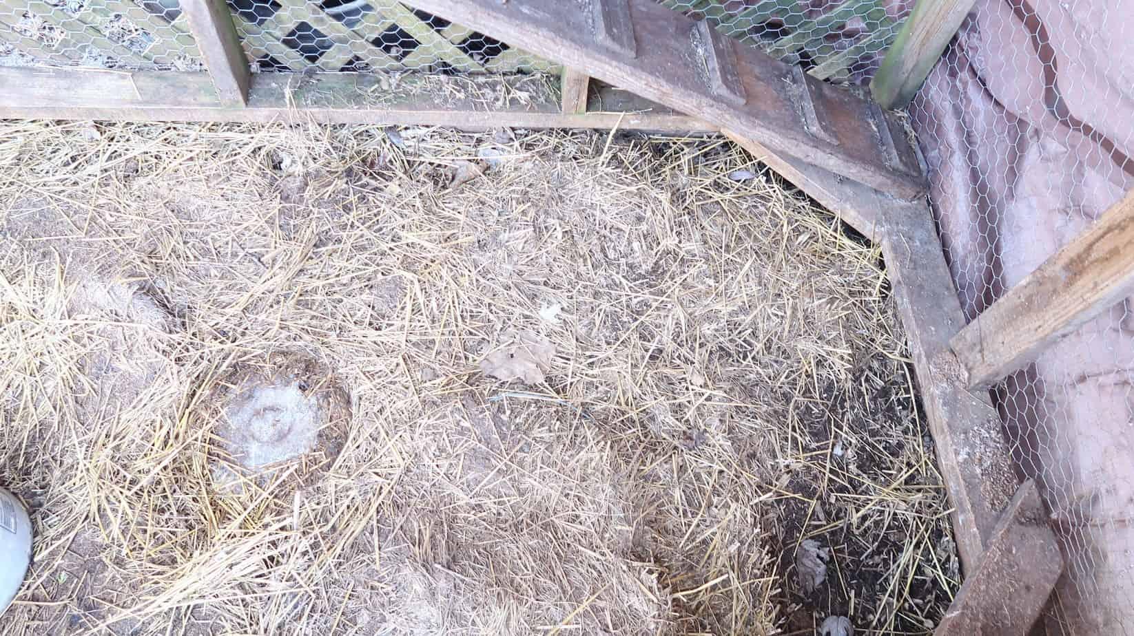 prparing chicken coop ground gravel