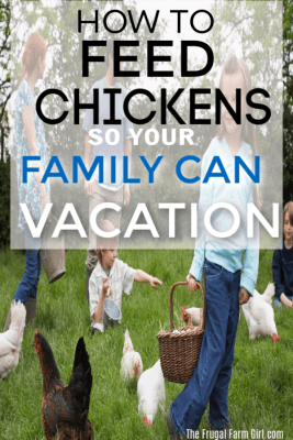 how to vacation with chickens