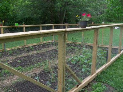 How to Create a Vegetable Garden in your Backyard