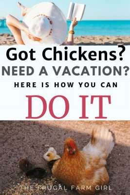 vacation with chickens