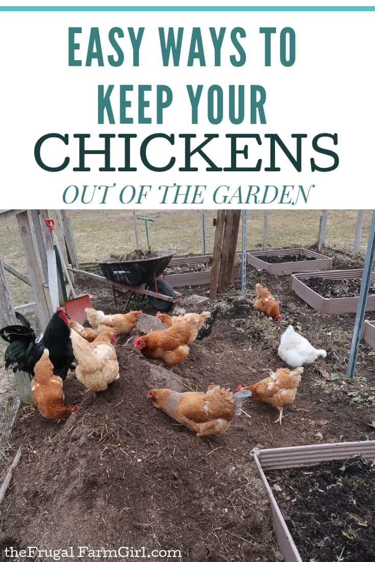 Easy Ways to Keep Your chicekns out of the garden