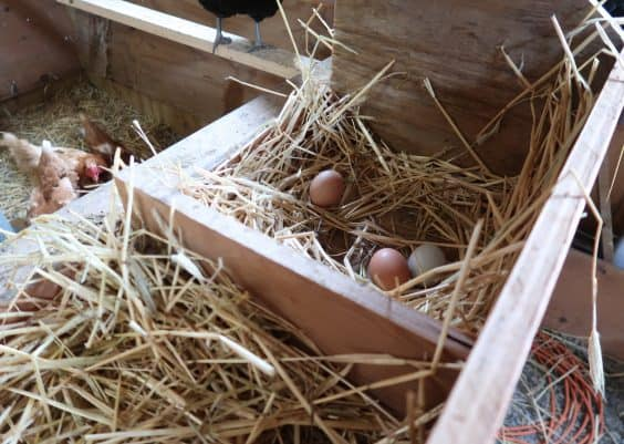 chicken egg nesting box