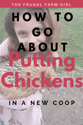How to Get Your Chickens To Stay in a New Coop