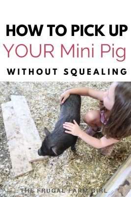 How to Hold a Baby Mini Pig Without Squealing