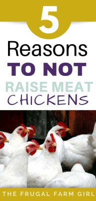 reasons to not raise meat birds
