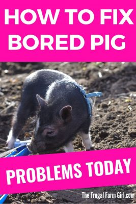 how to keep a pig enriched inside your home