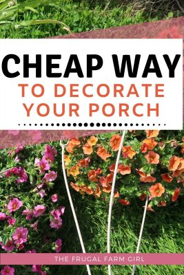 potted plants cheap