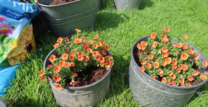 frugal ways for potted plants