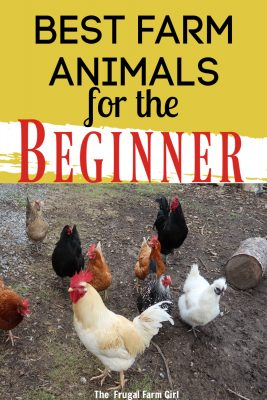 raise animals beginner