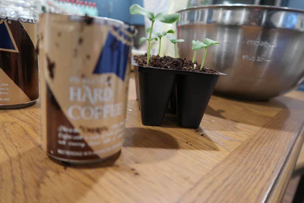 items to start seeds in