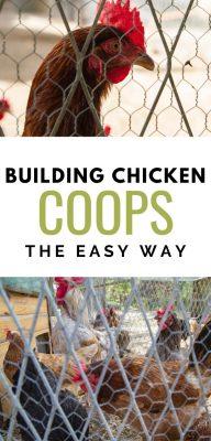 building chicken coops easy way