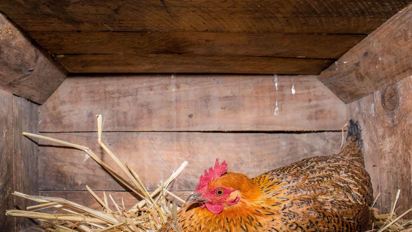 chicken coop instructions