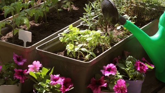 How to Choose the Best Outdoor Container Garden Location